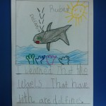 """I learned that the whales that have teeth are dolphins."""